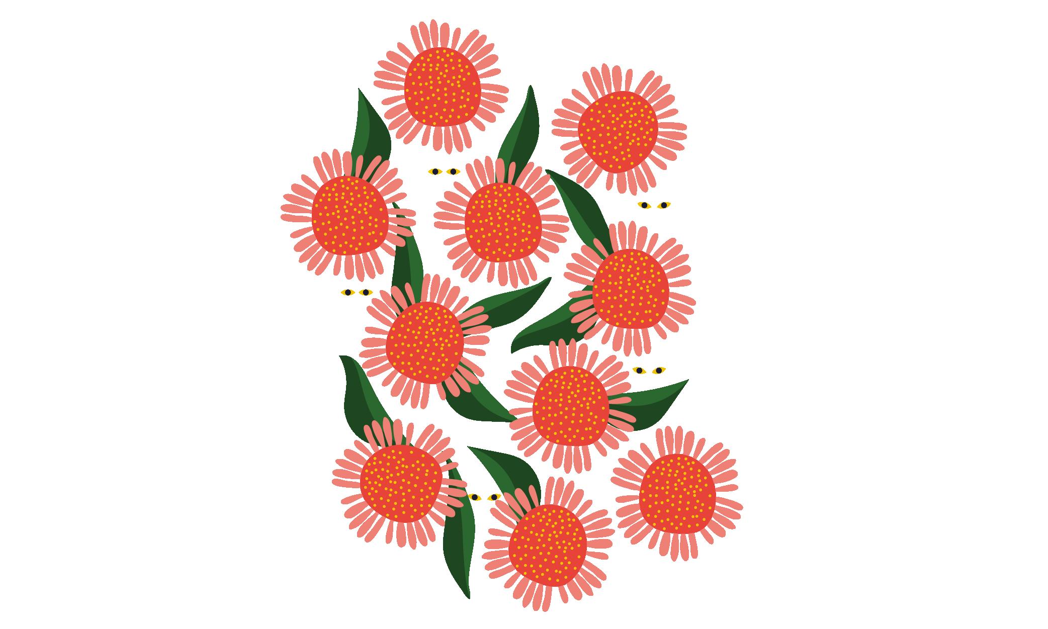 santa rosa illustration